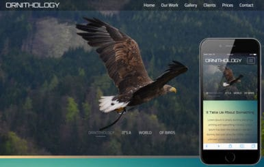 Ornithology An Animal Category Flat Bootstrap Responsive Web Template