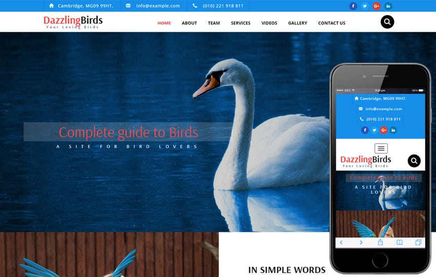 Dazzling Birds an Animal Category Bootstrap Responsive Web Template Mobile website template Free